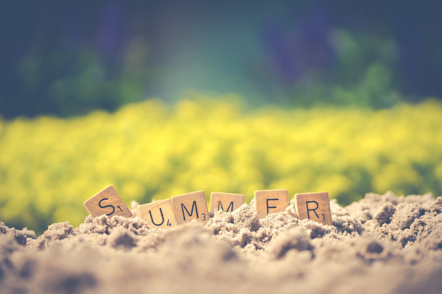Canva   Summer Letter Cube On Soil